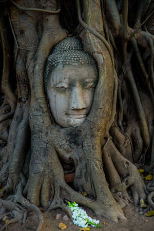 place of interest: Buddha head covered by roots of a tree at Ayutthaya province in Thailand,place of interest. Stock Photo
