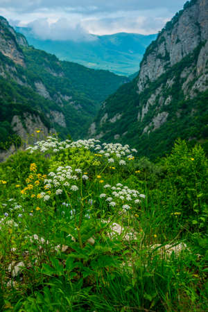 typically scottish: The peaks of blue-green mountains against the sky,the summer,field flowers.The Caucasus..Russia.