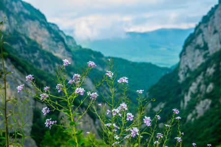 highland region: The peaks of blue-green mountains against the sky,the summer,field flowers.The Caucasus..Russia.