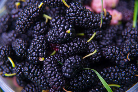 black berry: Black berry in the bucket ,mulberry Stock Photo