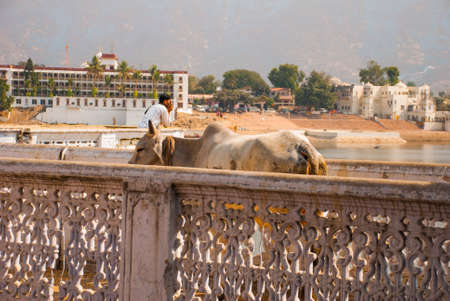 hindus: Pushkar is a city in the Ajmer district in Rajasthan, India. It is one of the five sacred dhams for devout Hindus. It is one of the oldest existing cities of India. Stock Photo