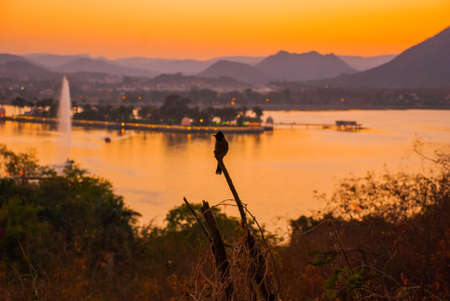 rajhastan: Beautiful view of the city. A bird sitting on a branch. House, mountains on the horizon. Panorama city Udaipur, India