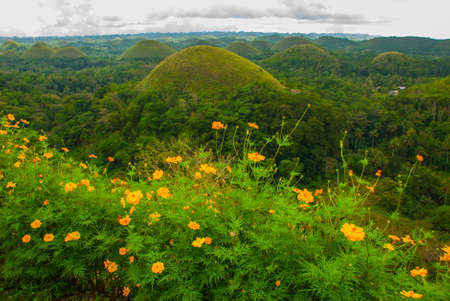 Chocolate Hills and yellow flowers, Bohol Island, Philippines Southeast Asia
