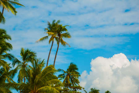 Beautiful tropical landscape with palm trees against the blue sea. Island, Bohol. Philippines