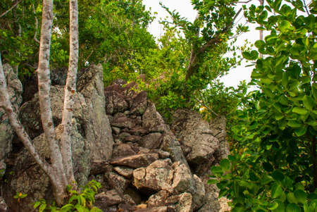 Trees and many stones in green. Apo island,Philippines