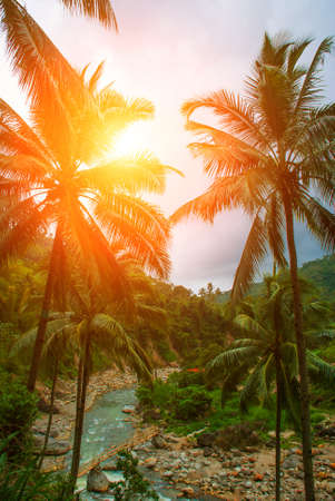 Top view of palm trees and the river. Beautiful landscape, island Negros. Philippines Stock Photo