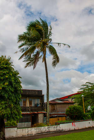 Palm tree on sky background and the local houses. Philippines. Pandan, Panay island