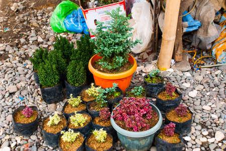 guayaba: Mercado local en Filipinas. Flores de liquidación en macetas. Pandan, isla de Panay