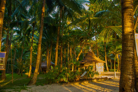 Beautiful tropical landscape with palm trees in the evenin. Boracay island, Philippines Stock Photo
