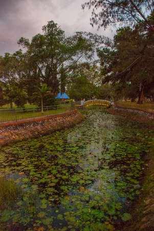 Overgrown pond with water lilies in the evening in the Park. Sabah, Malaysia. Kota Kinabalu