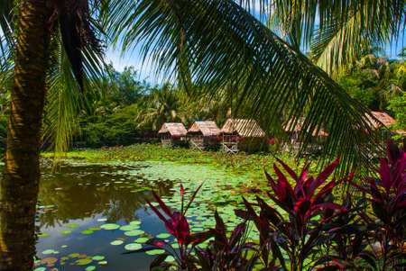 cumbria: Scenic view of lake with water lilies and palm trees, a small gazebo with a thatched roof. Borneo, Sarawak, Malaysia