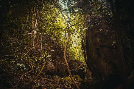 Nature rain forest. Tropical Rainforest Landscape, Malaysia, Asia Borneo Sabah