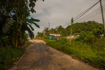 The road to the village with palm trees. Malaysia, Borneo island, Sabah. Stock Photo