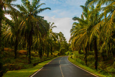 Road with palm trees. Malaysia, Borneo, Sabah.