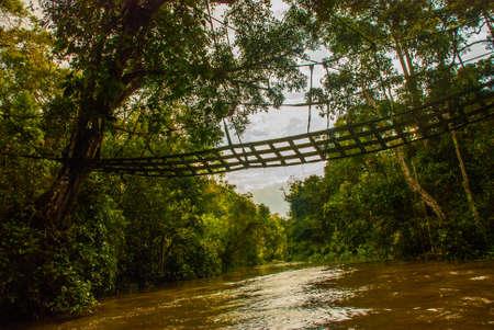 Kinabatangan river, Malaysia, rainforest of Borneo island Sabah