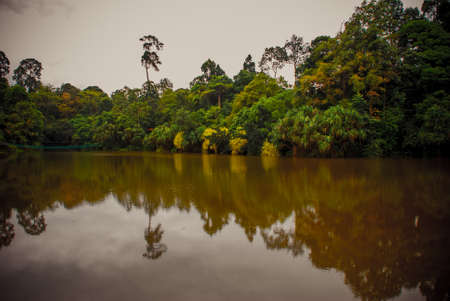 Lake in cloudy weather, the trees reflected in the water in the summer Borneo, Sabah, Malaysia Stock Photo