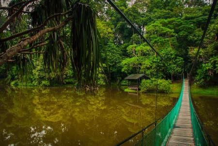 The suspension bridge over the lake in the summer, Borneo, Sabah Malaysia Stock Photo - 85049163