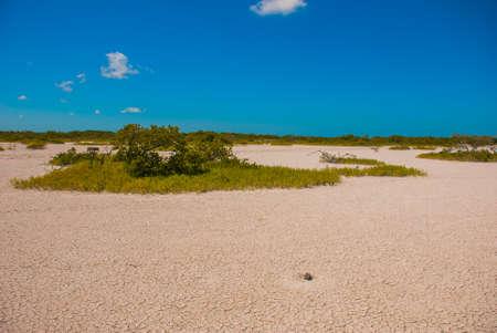 Cracked earth in white clay. Rio Lagartos Yucatan, Mexico.