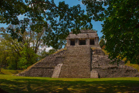 Palenque, Chiapas, Mexico: Ancient Mayan pyramid with steps among the trees in Sunny weather. Ancient Mayan city.