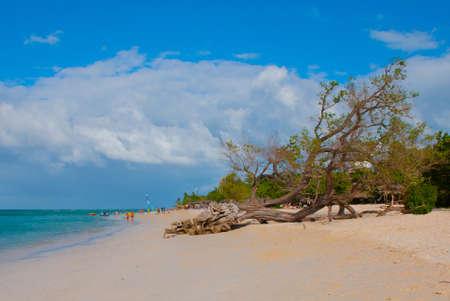 Holguin, Guardalavaca Beach, Cuba: Caribbean sea with beautiful blue water, sand and a fallen tree. Beautiful scenery