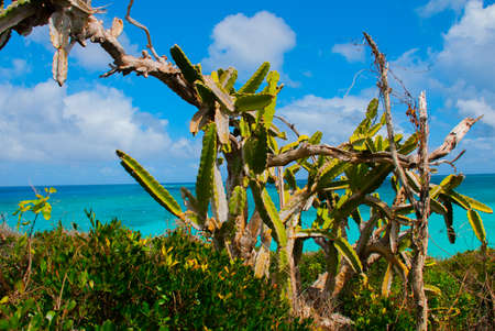 Landscape with a huge cactus and plants in sunny weather. Thickets in the forest. Holguin, Cuba. Stock Photo