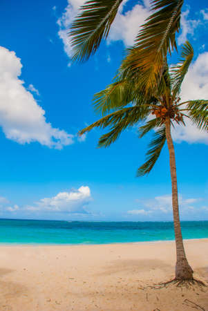 Holguin, Cuba, Playa Esmeralda. Beautiful Caribbean sea turquoise blue color and palm trees on the beach
