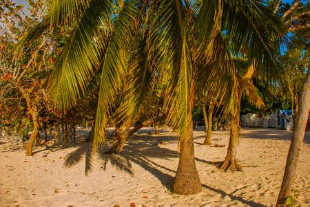Playa Esmeralda, Holguin, Cuba. Palm trees grow in the sand on the beach, sunny beautiful summer day Banco de Imagens
