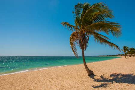 Panorama of wide, sandy beach on a tropical island with a coconut palm tree. The beautiful beach of Playa Ancon near Trinidad, Cuba Stock Photo