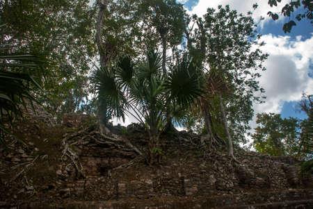 Ruins of Mayan pyramid at jungles. Coba. Mexico, Yucatan. Coba is an archaeological area and a famous landmark of Yucatan Peninsula.