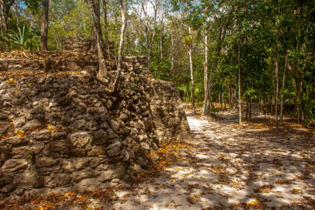 Coba, Mexico. Ancient mayan city in Mexico. Coba is an archaeological area and a famous landmark of Yucatan Peninsula. Forest around the pyramids in Mexico.