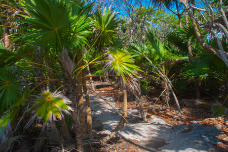 Tulum, Mexico, Yucatan: Beautiful landscape with palm trees. Sunny day in the Park, shadows of trees on the road.