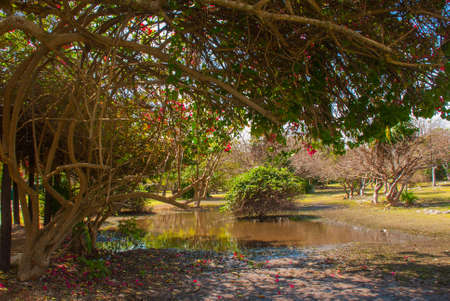 Beautiful landscape in Mexico. Pond and trees with red flowers. Tulum, Riviera Maya, Yucatan. Stock Photo