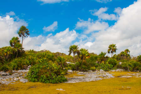 Tropical landscape with palm trees on a Sunny day. The concept of recreation and tourism. Tulum, Mexico, Yucatan, Riviera Maya.