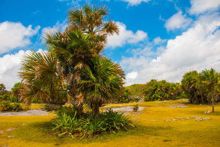 Beautiful tropical Mexican landscape with views of palm trees. Tulum, Mexico, Yucatan, Riviera Maya.