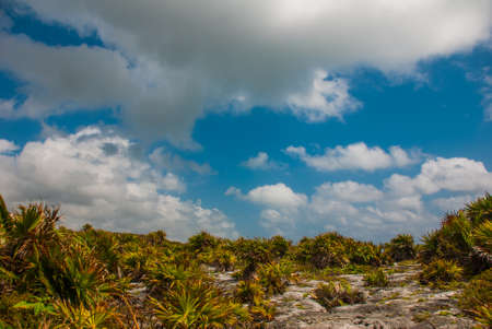 Beautiful Mexican landscape with trees and bushes on a blue sky background with white clouds. Tulum, Riviera Maya, Yucatan.
