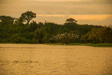 Amazon river, Manaus, Amazonas, Brazil, South America: Beautiful sunrise on the Amazon river. landscape with a view of the river and the sky.