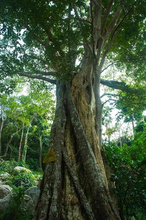 PHAN THIET, VIETNAM - DECEMBER 2014: beautiful tree in the Park.