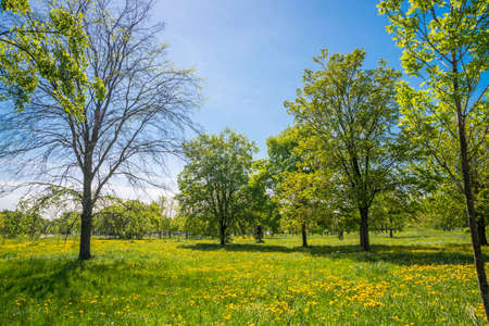 Russia, Saint Petersburg: view of the beautiful summer landscape in the Park