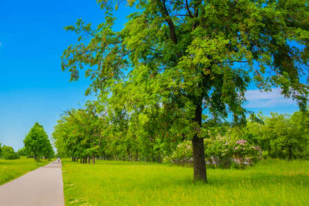 Beautiful landscape with a Park with green leaves and a blue sky with white clouds in summer. Saint Petersburg, Russia.