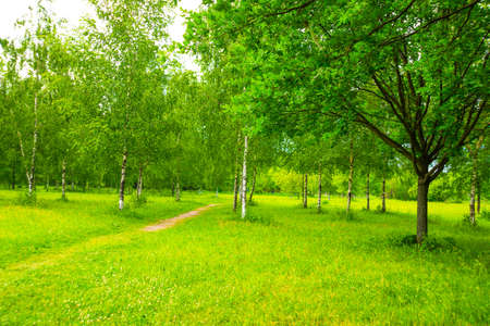 Landscape with a Park with green leaves and a blue sky with white clouds in summer. Saint Petersburg, Russia. Stok Fotoğraf