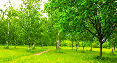 View of a beautiful summer landscape in a Park with birch trees. Russia Stok Fotoğraf