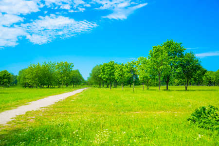 Landscape with road and trees against a blue sky with white clouds in summer. Saint Petersburg, Russia.
