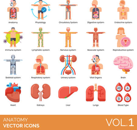 Flat icons of human anatomy system, physiology, internal organs, blood type Illustration