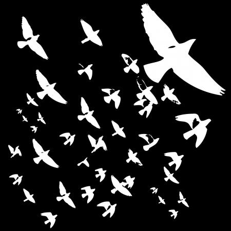 flocking: black background birds life art