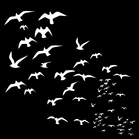flock of birds: black background birds life vector art Illustration