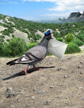 pigeons: Messenger Pigeon With Letter on a mountain road  Stock Photo