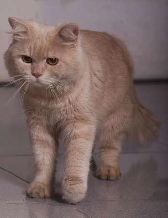 otganimalpets01: Cat standing on the floor Stock Photo