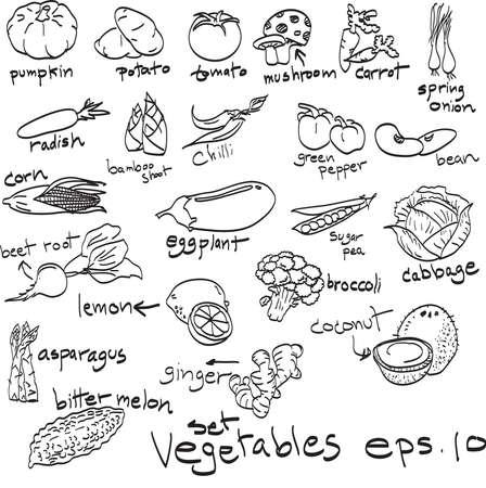 hand drawn set of vegetables, doodles.