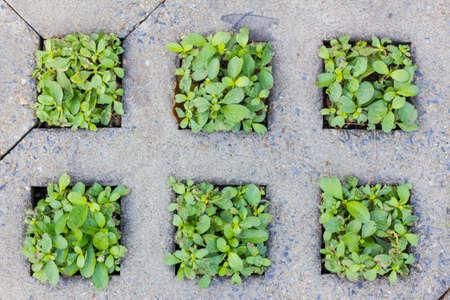 groene planten groeien tussen de betonverharding, achtergrond