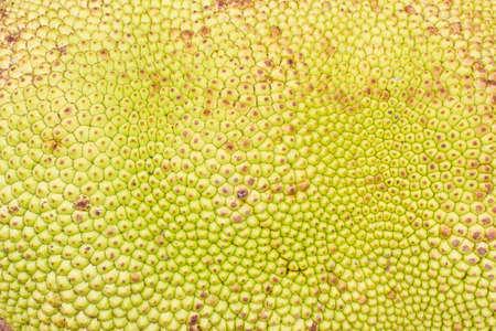 jack fruit: close-up jack fruit Texture, background Stock Photo